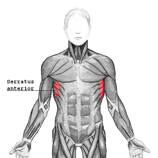 Serratus Anterior abstehende Schulterblätter korrigieren